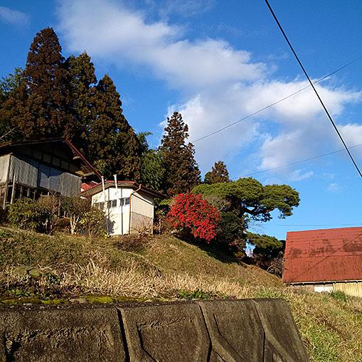 20151230_fujisawa_sanpo_02.jpg
